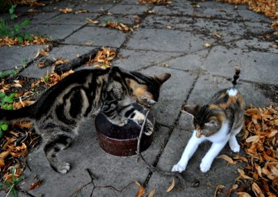 Lusitige Katzenkinder